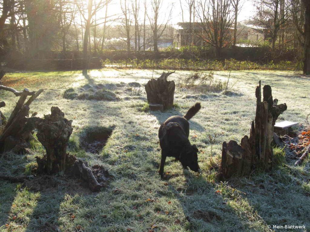 Ein Hund auf der Wiese im Januar