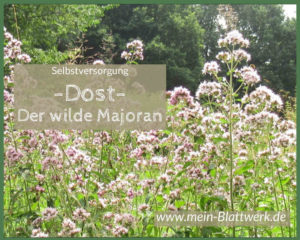 Read more about the article Echter Dost – der wilde Majoran